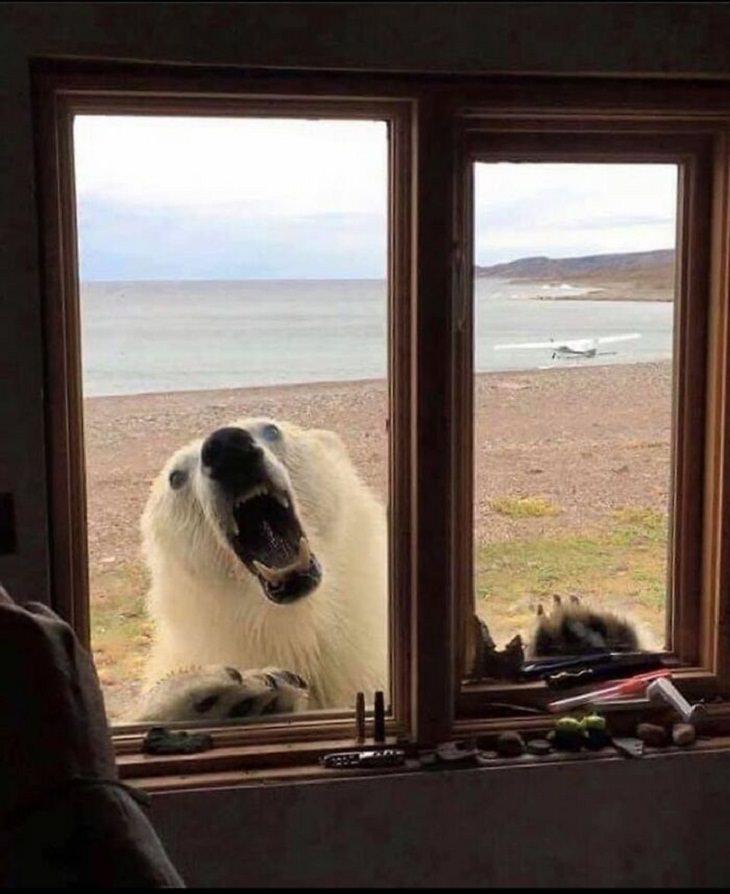 14 Bizarre Pics, polar bear