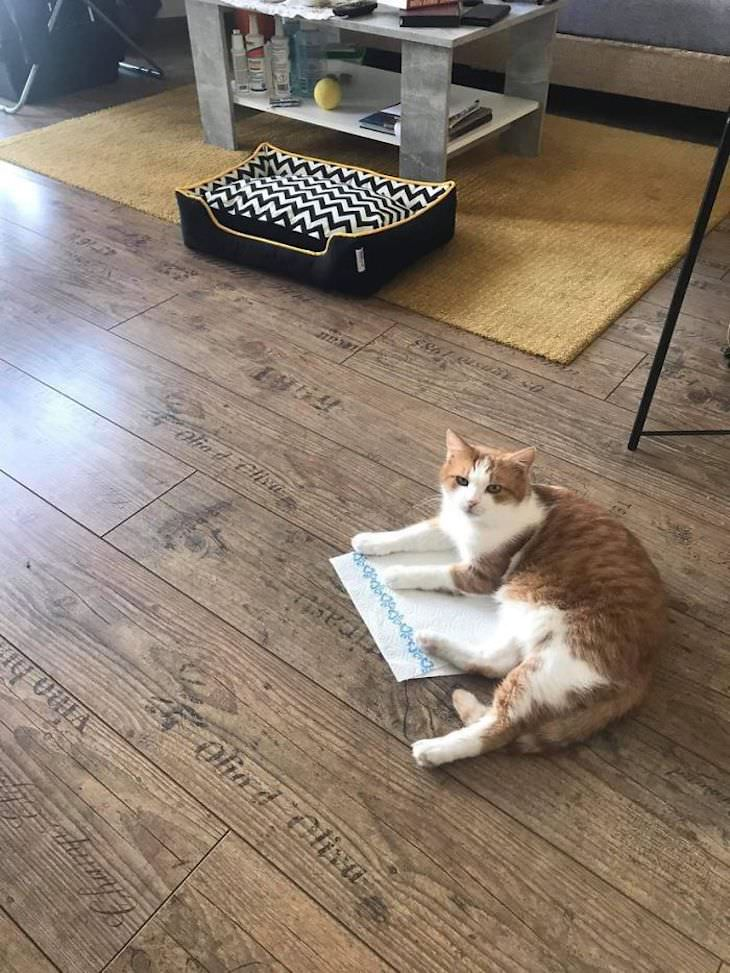 Cats Caught Sleeping Anywhere But Their Beds, paper towel