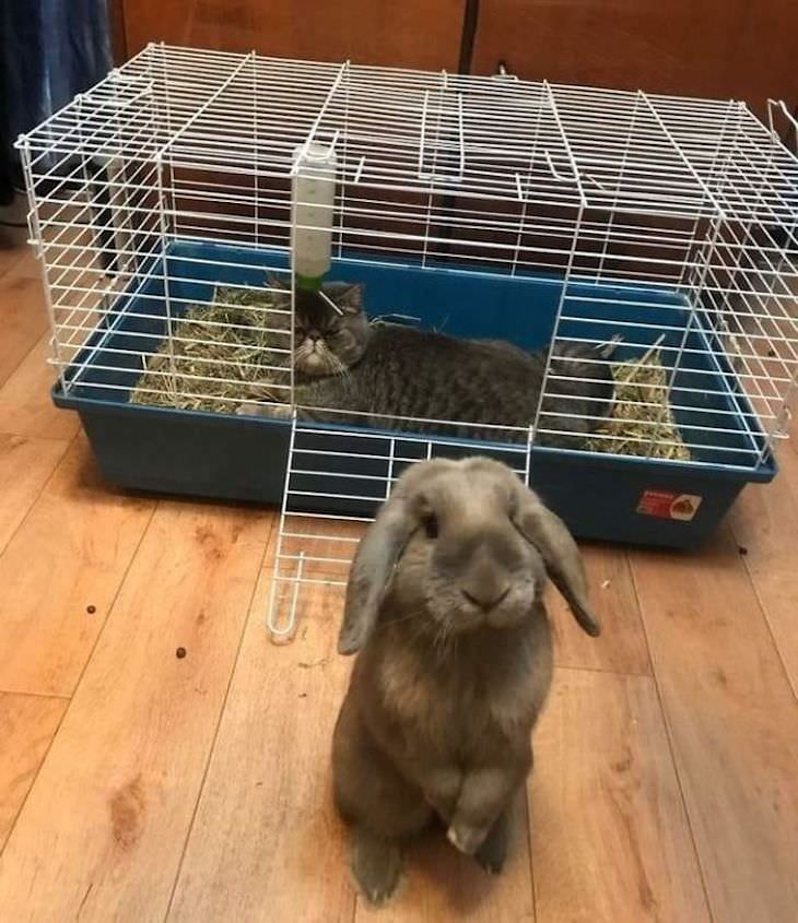 Cats Caught Sleeping Anywhere But Their Beds, bunny cage