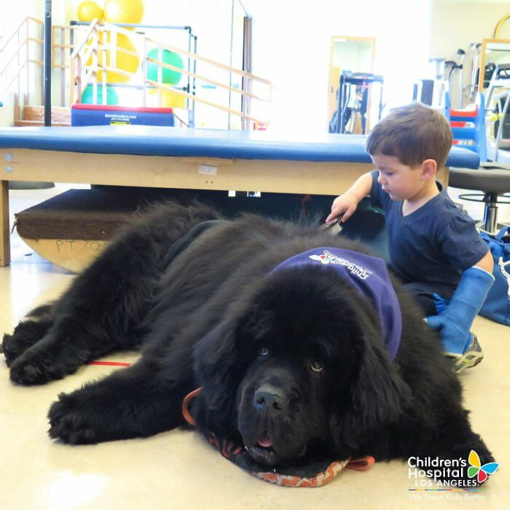 Enormous Dogs Being Cute, rehabilitation clinic