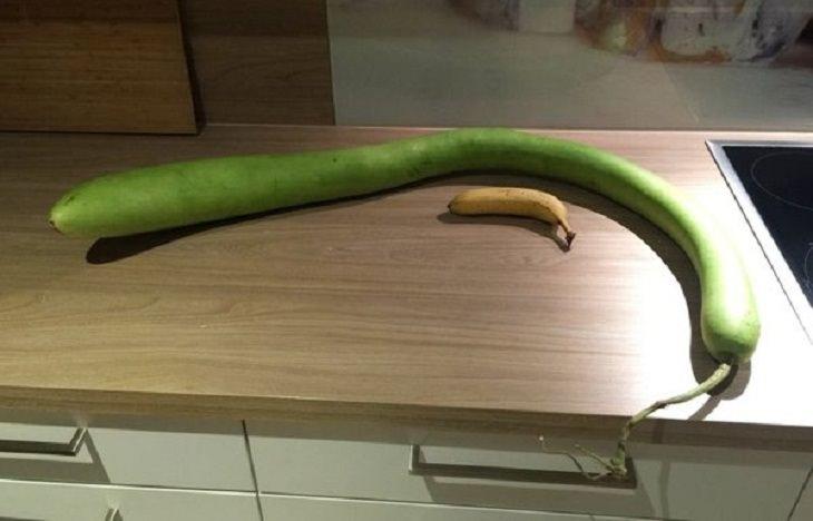 Funny-Shaped Fruits & Veggies, opo squash