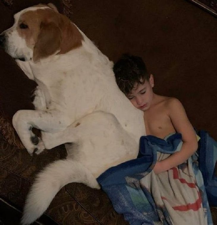 Friendships Between Humans and Animals, dog