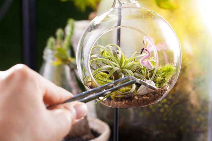 Small Indoor Plants Air Plants (Tillandsia)