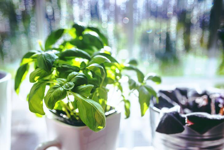 Small Indoor Plants Kitchen Herbs