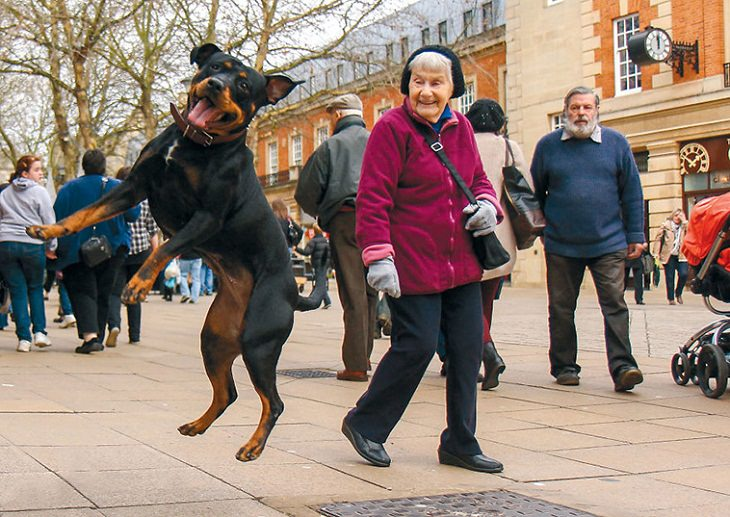 Perfectly Timed Photos of Dogs, dance
