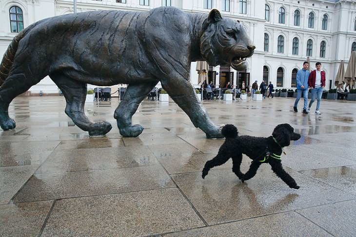 Perfectly Timed Photos of Dogs, tiger statue