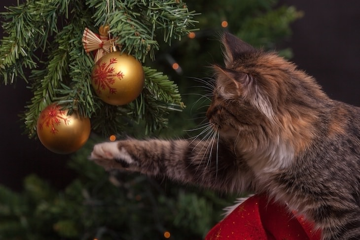 Christmas Trees and Pets: A Few Safety Tips, cat playing with ornament