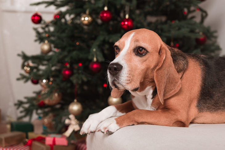 Christmas Trees and Pets: A Few Safety Tips, dog