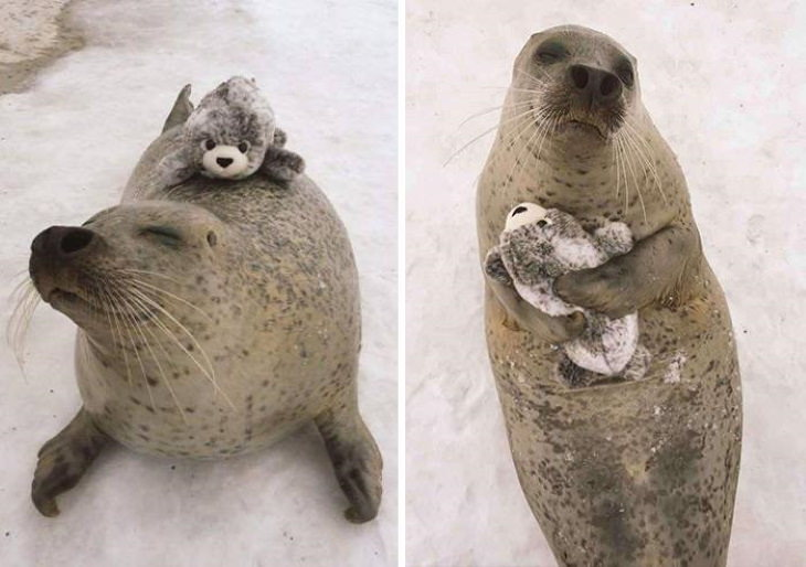 Photos of Animals and Their Favorite Toys seal