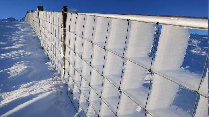 Stunning Accidental Snow Sculptures, forzen fence