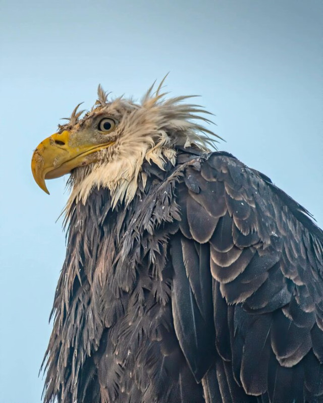 Funny Wildlife Photos bald eagle