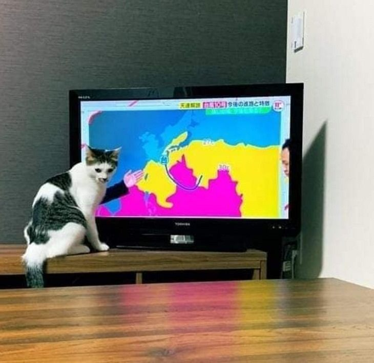 Deceptive Photos, cat, weather reporter.