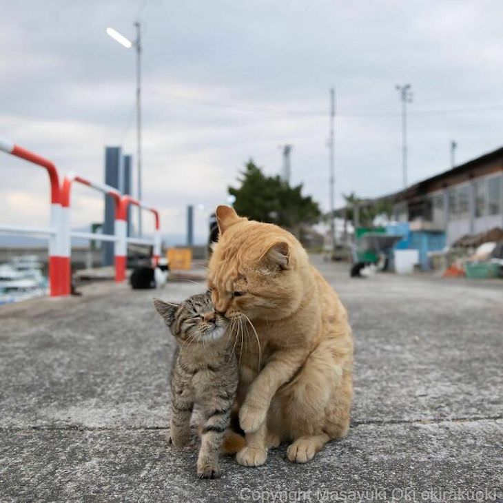 Tokyo's Stray Cats Captured in Funny Moments, motherly love