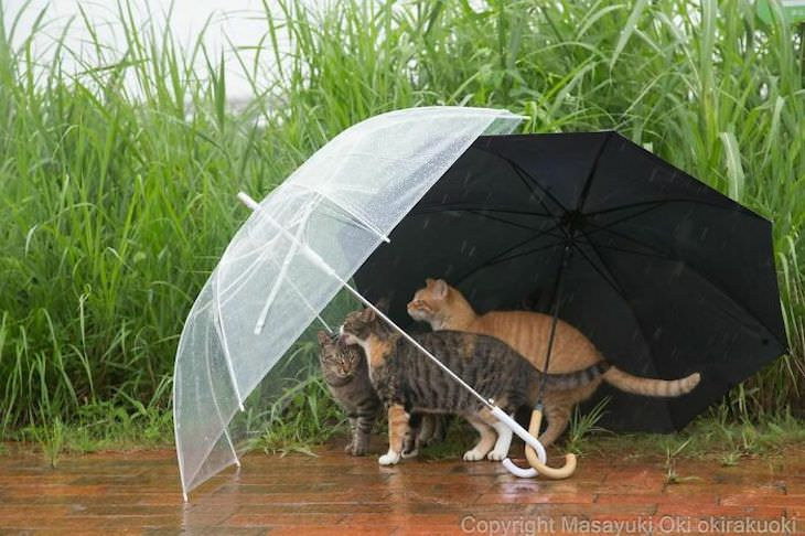 Tokyo's Stray Cats Captured in Funny Moments, hiding behind umbrellas