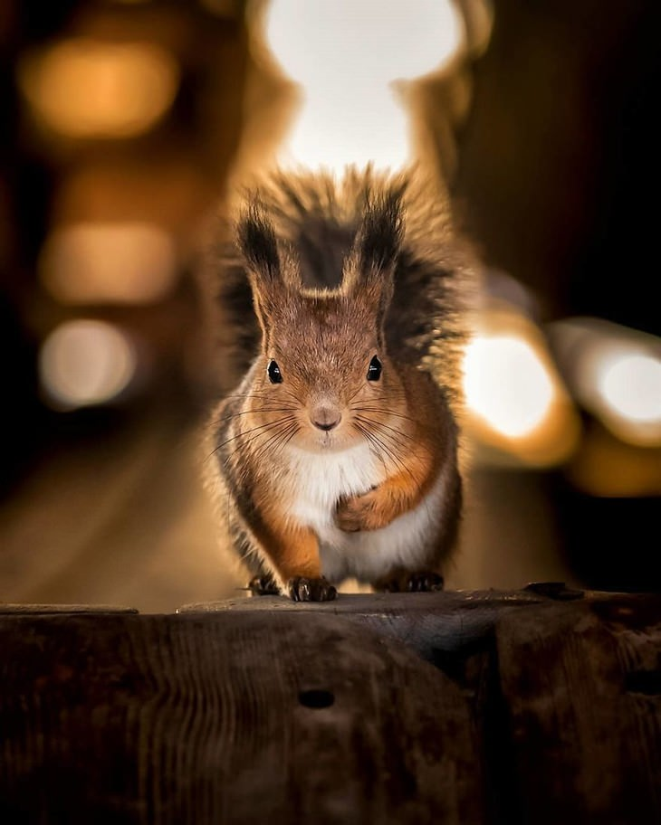 Ossi Saarinen animal photography squirrel