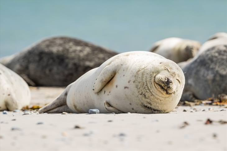 15 Cute Photos of Seals in the Wild
