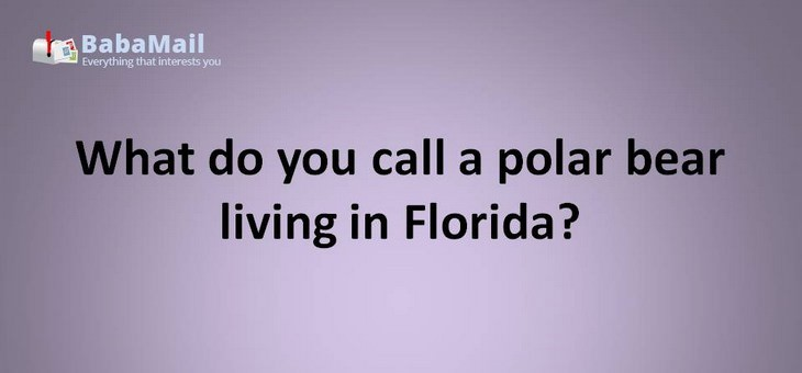 Animal puns: What do you call  a polar bear living in Florida? a solar bear