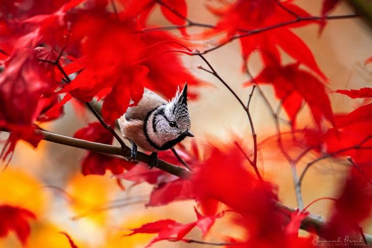 Hannah Assil bird photos The Punkrocker