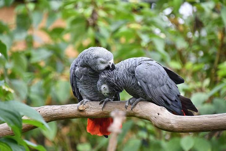 Animal Facts parrots