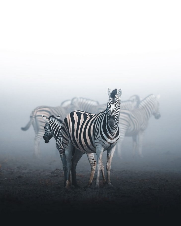 Faded, Etosha National Park, Namibia