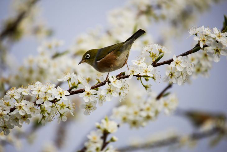 spring photos bird on a branch