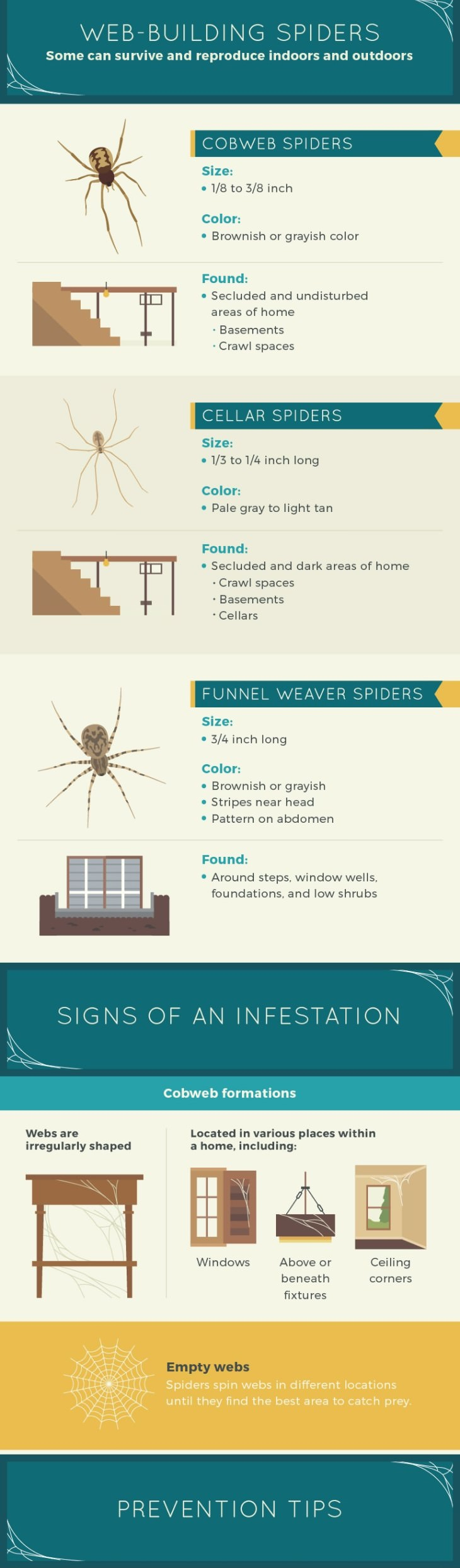 guide for identifying house spiders infographic