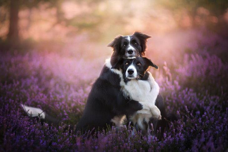 Alicja Zmysłowska dog photos cute