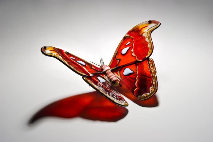 Laura Hart Glass Butterfly Sculptures Attacus Atlas
