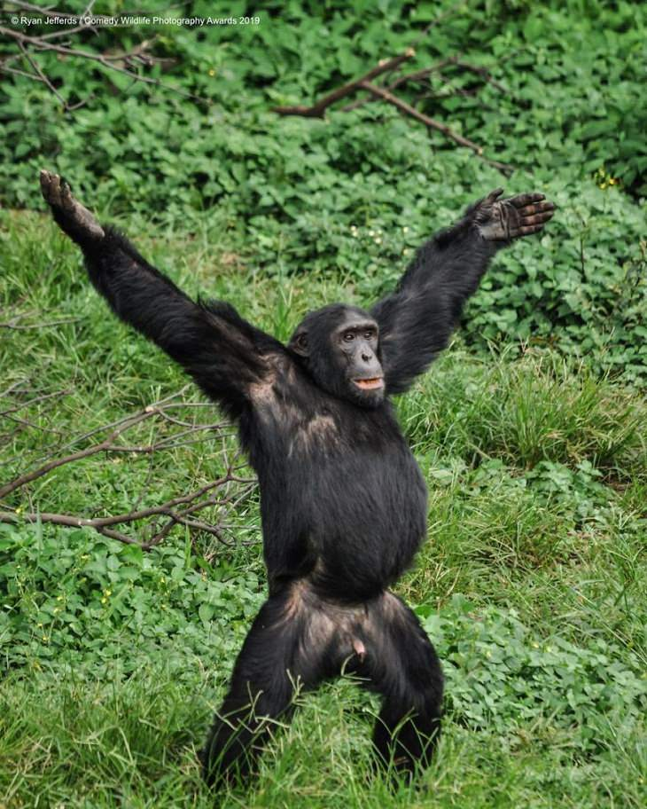 Funny Animal Pictures, gorilla