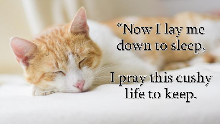 cat prayer Now I lay me down to sleep, I pray this cushy life to keep.