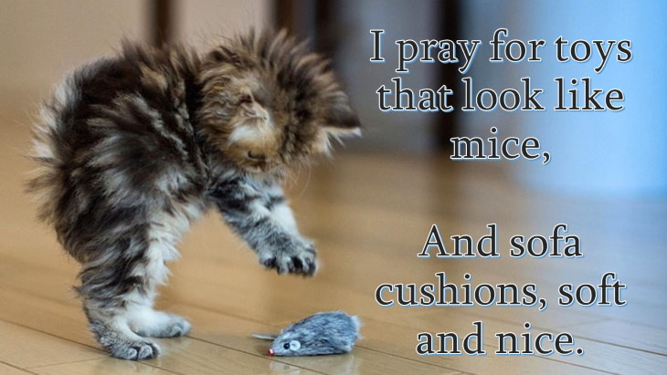 cat prayer I pray for toys that look like mice, And sofa cushions, soft and nice.
