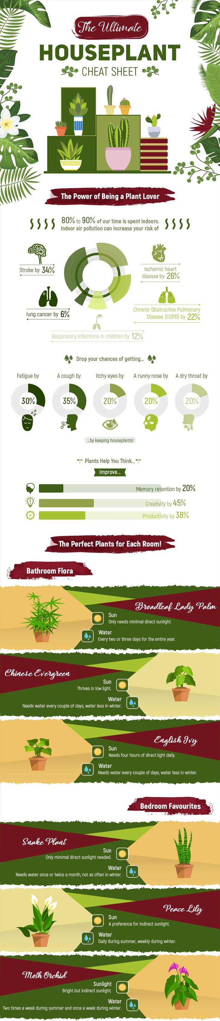house plant infographic