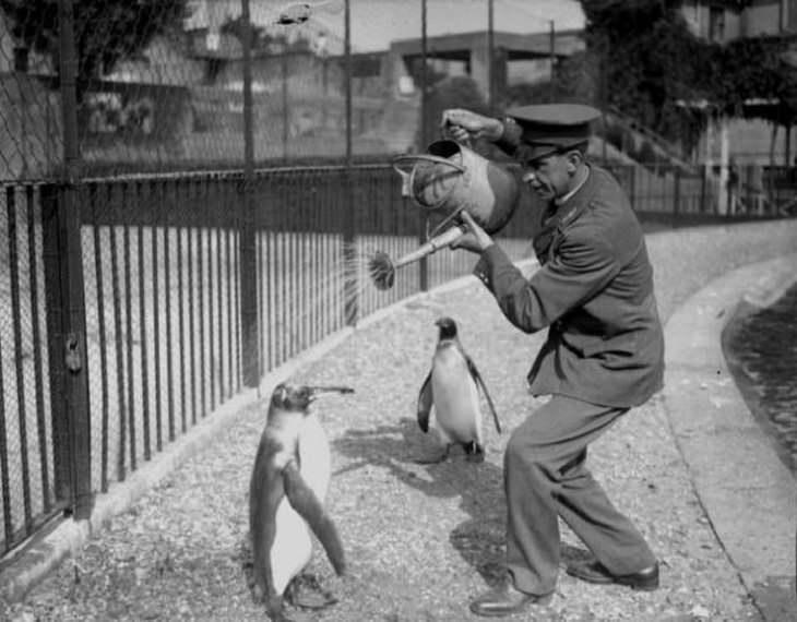 Historical Pics , zookeper, penguins