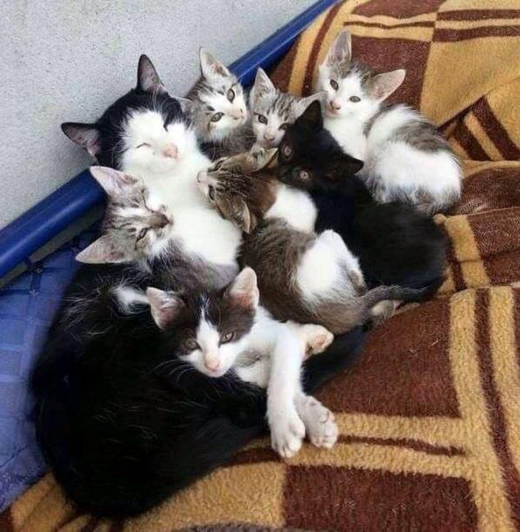 תמונות משפחתיות של חיות: גורי חתולים ליד אימם