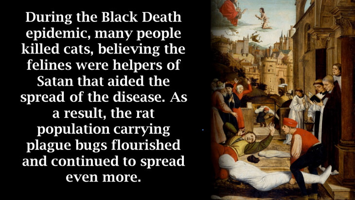 12 Ironic Stories from History black death