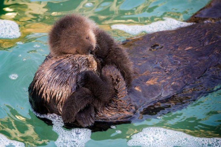 תמונות משפחתיות של חיות: בן ואימא בונים מחובקים