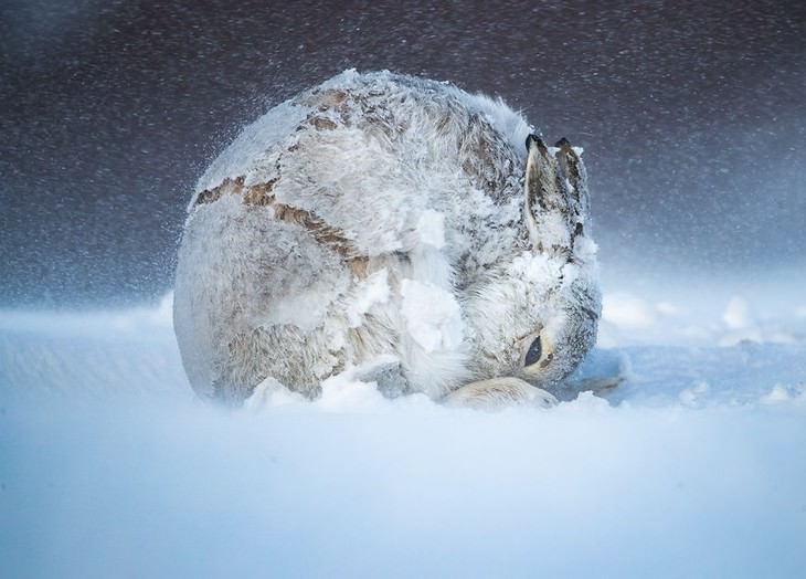 16 Amazing Nature Photos from Big Picture 2020 Competition