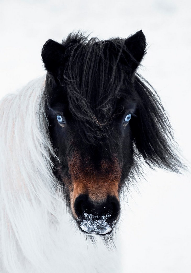 The Magic of Iceland in 15 Mesmerizing Photos Husky Eyed Horse