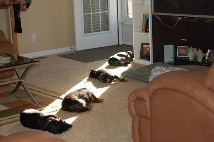 Animals Basking in the Sun, dogs