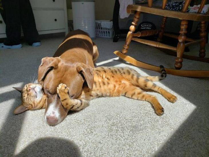 Animals Basking in the Sun, cat and dog