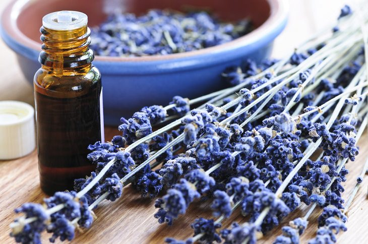Natural Home Remedies for Your Dog, lavender oil