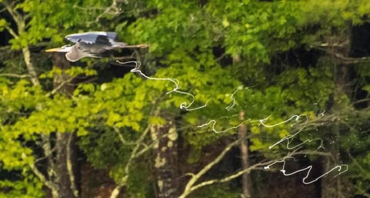 Hilariously Bad Wildlife Photographs, bird