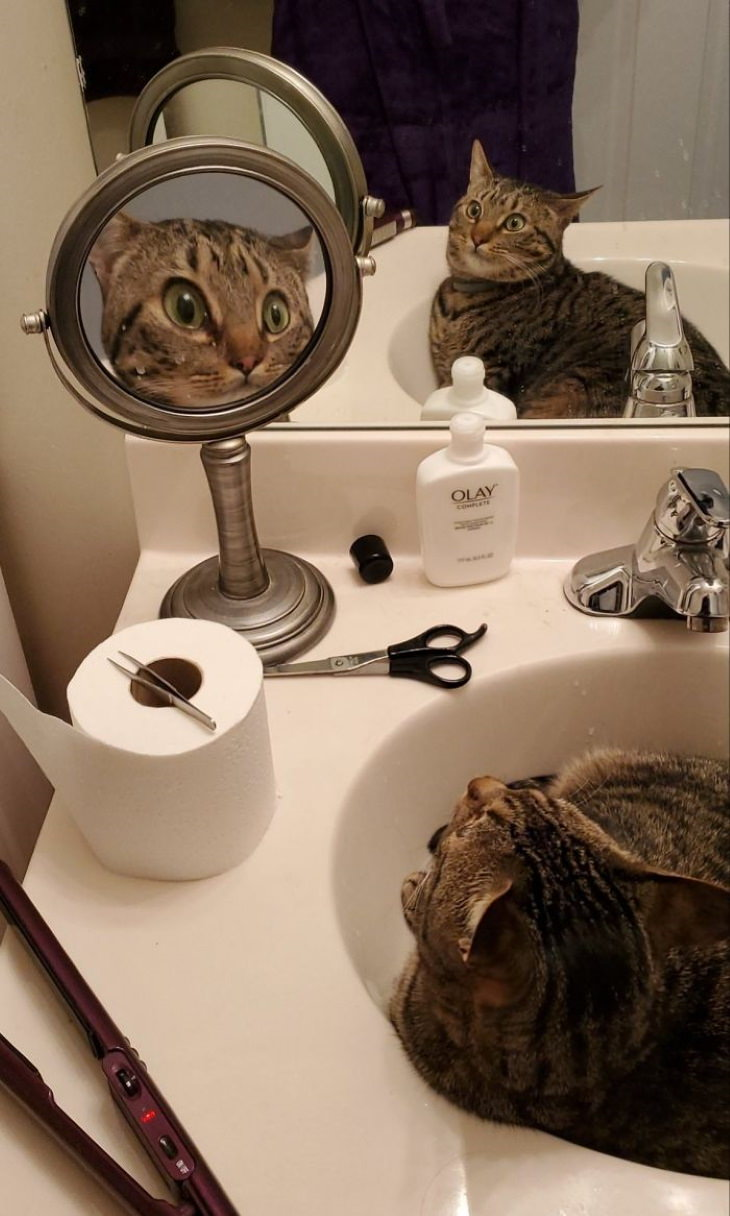 Pets Discovered Mirrors and It's Hilarious