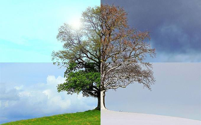 tree in 4 seasons