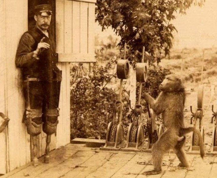 Bizarre Stories from History Jack, the Baboon Signalman and James Wide