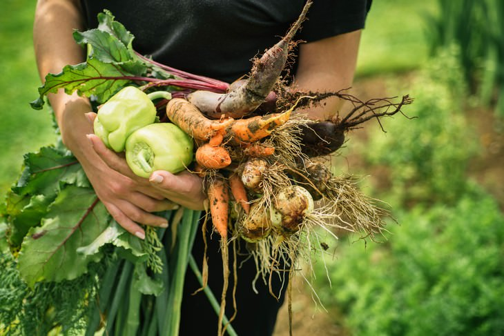 Gardening Increases Emotional Wellbeing Study Find