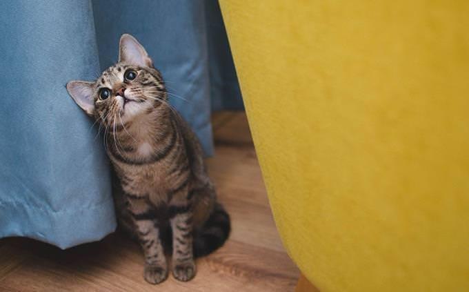 מבחן אישיות: חתול