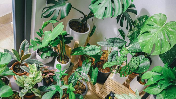 tips to cool down the bedroom indoor plants