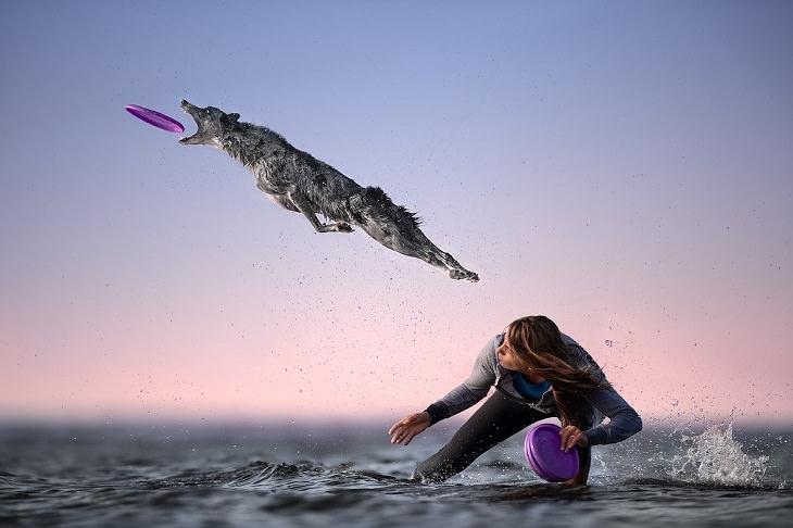 Photos of Motion, dog