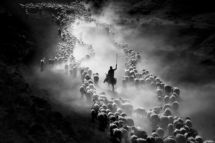 Fotos de Motion, Shepherd